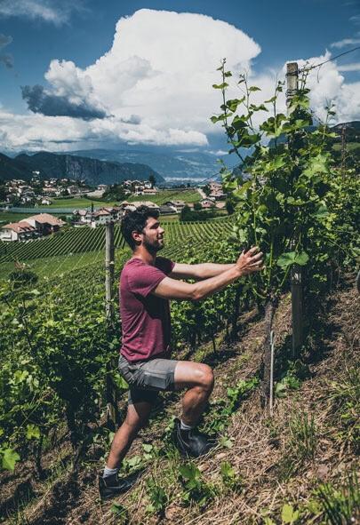 Hannes Pfischer tending to the vines at Tenuta Pfischer