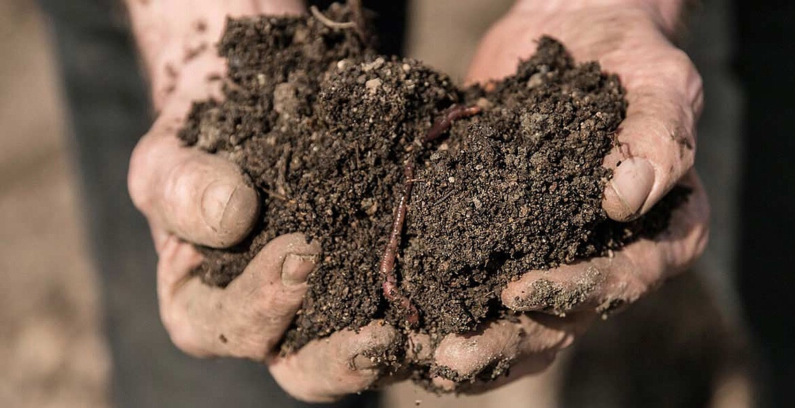 Image of soils from vineyards in Peter Jakob Kühn