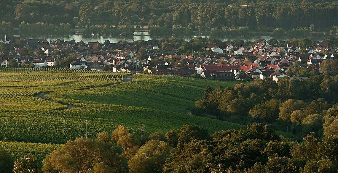 View from the Peter Jakob Kühm Estates, Rheingau, Germany
