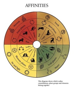 Diagram showing affinities between astrology and plants