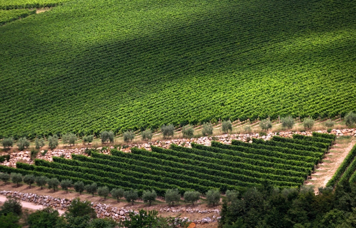The vineyards at Zenato Winery In Valpolicella Classico