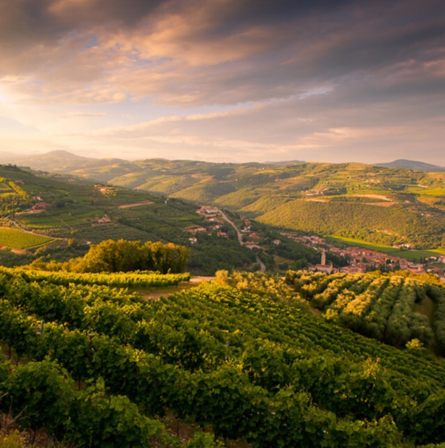 The abundantly green and hilly region of Valpolicella in Veneto, Italy
