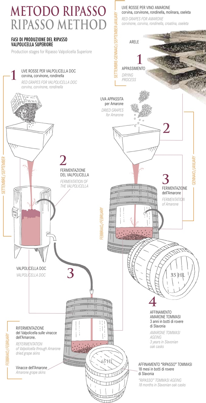 Info graphic from Tomasi winery showing the production methods for Amarone