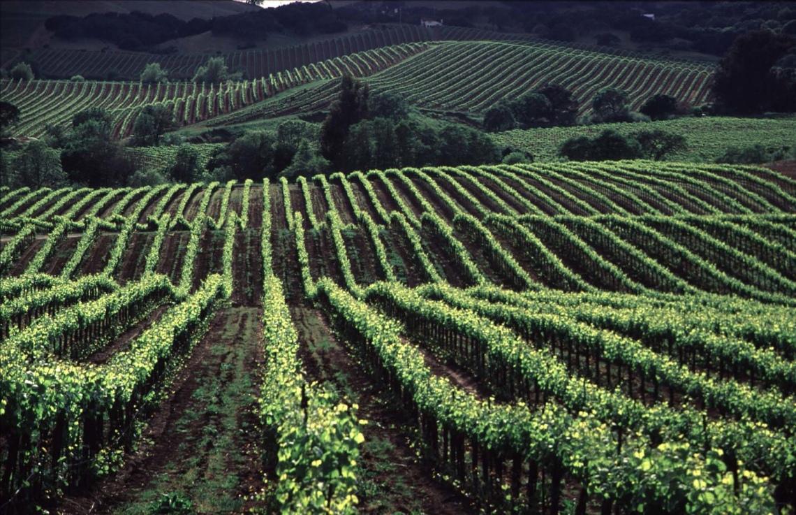 The vineyards at Speri