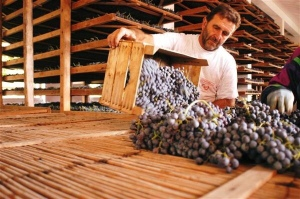 Extending the grapes for drying