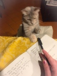 My cat playing with my tasting notes