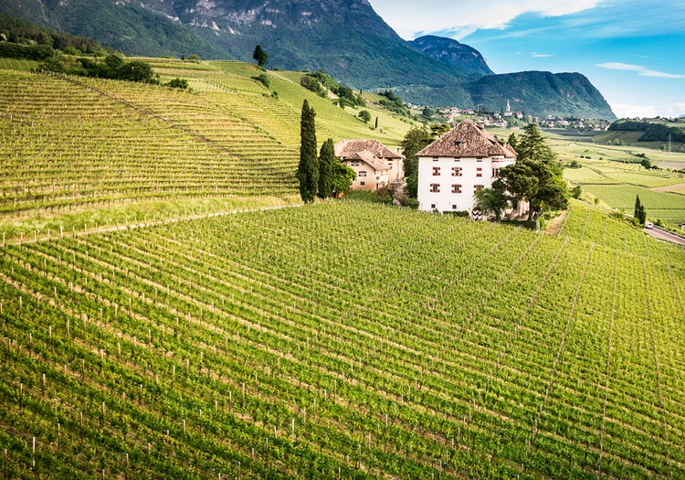 The vineyards and estate in Alto Adige, Italy