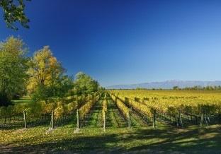 The vineyards of Vini La Delizia in Friuli Venezia Giulia